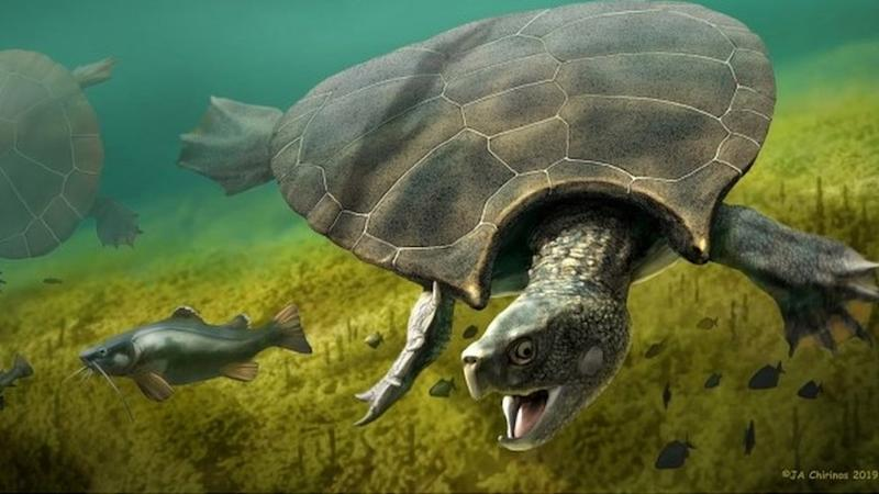 Stupendemys geographicus