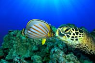 """<p>Disney's mesmerizing French nature documentary explores how the ocean impacts human life and the environment. Melt away your troubles with the beautiful underwater cinematography!</p> <p>Watch <a href=""""http://www.netflix.com/title/70118953"""" class=""""link rapid-noclick-resp"""" rel=""""nofollow noopener"""" target=""""_blank"""" data-ylk=""""slk:Oceans""""><strong>Oceans</strong></a> on Netflix now.</p>"""