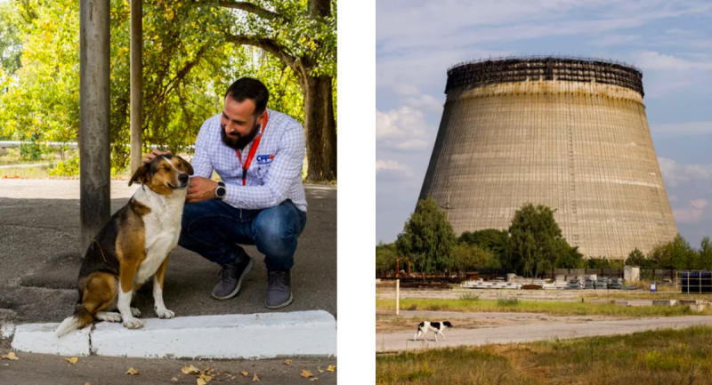 Meet the pups looking for new homes in the Chernobyl Exclusion Zone. (Photo: Airbnb)