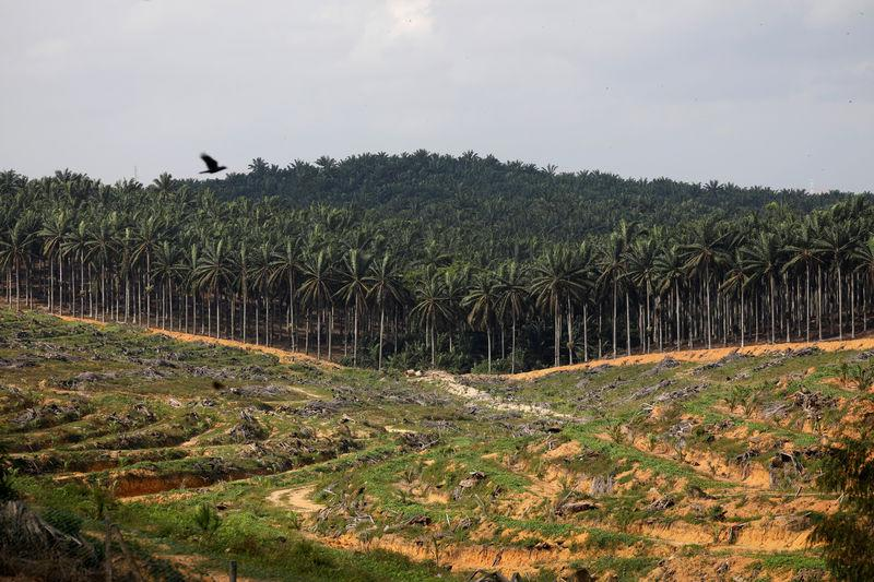 Land that has been cleared is pictured at an oil palm plantation in Johor