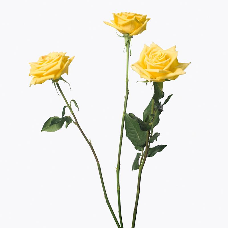 3 Yellow Roses, 2013. (One of a series of Inez & Vinoodh images that appears in a video compilation at the show.) Courtesy of Inez & Vinoodh.