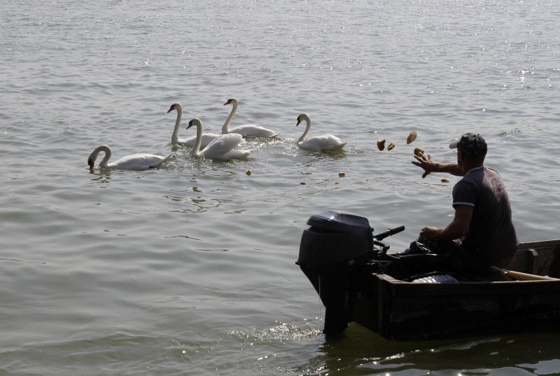 In this Sept. 18, 2012 photo fisherman Renato Grbic feeds swans near the Pancevo Bridge over the Danube river in Belgrade, Serbia, Tuesday, Sept 18, 2012. Grbic has saved the lives of 25 people who attempted to kill themselves by jumping from a nearby bridge. Over the years, Grbic has rescued people of all ages, social background and gender. There were young girls, middle-aged women, younger or older men. (AP Photo/Darko Vojinovic)