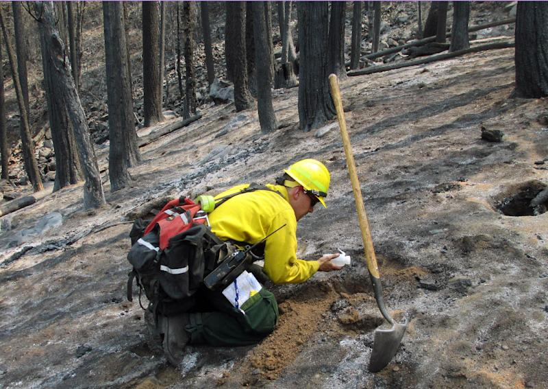 In this September 2013 photo provided by the U.S. Forest Service, a soils scientist from the Burned Area Emergency Response team assesses a burn area in the Rim Fire near Yosemite National Park, Calif. Of the more than 250,000 acres that burned within the Rim Fire perimeter, the National Park Service's Burned Area Emergency Response team estimated Monday Sept. 16, 2013, that 7 percent burned at high severity, 37 percent at moderate severity and the other 56 percent either didn't burn or burned at low severity. (AP Photo/U.S. Forest Service, Brad Rust)