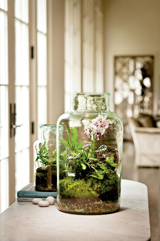 <p>Choose a glass container with an opening wide enough for your hand. Add gravel, a thin layer of activated aquarium carbon, and potting soil, and get ready to plant. Ferns, succulents, mosses, miniature moth orchids, African violets, and kalanchoes all thrive in terrarium arrangements.</p>