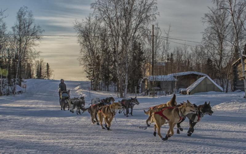 In a photo provided by the Iditarod Trail Committee, Iditarod musher Katherine Keith arrives at the Huslia checkpoint with 13 dogs in harness Friday morning March 10, 2017, in Huslia, Alaska. Huslia is the halfway point of the Iditarod Trail Sled Dog Race at mile 478 of the 979-mile trail for this year¹s race. (Mike Kenney/Iditarod Trail Committee via AP)