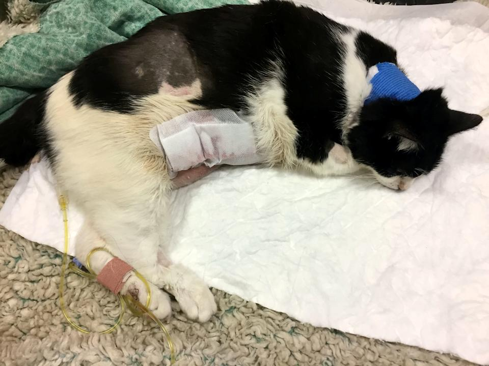 The Met Police were left with an £8,000 vet bill after one of their dogs savaged a cat that had to be put down six days later. (SWNS)