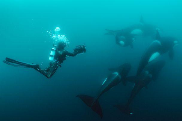 PHOTO: Documenting orca hunting rays in the waters off of the North Island in New Zealand. (Brian Skerry)