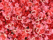 """<p>A rose by any other name <em>may </em>smell as sweet — but a rose of any other color may mean something quite different. In fact, the most popular flower in America has many different meanings, depending on the color of its bloom. That's why we've rounded up all of the common hues that you can find in a rose, and what each color symbolizes.</p><p><a href=""""https://www.goodhousekeeping.com/home/gardening/g2503/surprising-flower-meanings/"""" rel=""""nofollow noopener"""" target=""""_blank"""" data-ylk=""""slk:Floriography"""" class=""""link rapid-noclick-resp"""">Floriography</a>, also known as the language of flowers, was all the rage in the Victorian era. Gifting someone flowers was never just a gift — each flower had a secret meaning that could be used to convey to your sweetheart how you really felt. Not only was the <a href=""""https://www.1800flowers.com/blog/flower-facts/meaning-of-victorian-flower-messages/"""" rel=""""nofollow noopener"""" target=""""_blank"""" data-ylk=""""slk:manner of delivery and arrangement"""" class=""""link rapid-noclick-resp"""">manner of delivery and arrangement</a> meaningful, but the type and color of your flowers meant the difference between saying """"I'm sorry"""" and """"I love you."""" Roses did, as they do today, symbolize love. But whether it's friendship or romantic love depends on the shade of the rose. Here's a comprehensive list of all rose color meanings so that the one you love can receive a rose as special as your relationship delivered to their door on Valentine's Day (check out the <a href=""""https://www.goodhousekeeping.com/home/gardening/advice/g2323/best-flower-delivery-service/"""" rel=""""nofollow noopener"""" target=""""_blank"""" data-ylk=""""slk:best flower delivery services"""" class=""""link rapid-noclick-resp"""">best flower delivery services</a> for more on that!).</p>"""
