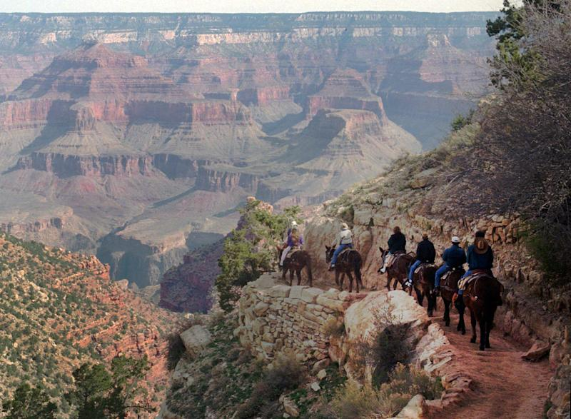 File-This March 27,1996 file photo shows a mule train winds its way down the Bright Angel trail at Grand Canyon National Park, Ariz. The start of one of the Grand Canyon's most iconic and popular trails has been redesigned and now includes an etched rock sign marking the Bright Angel trailhead. (AP Photo/Jeff Robbins,File)