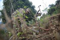 Bolivian soldiers destroy illegal coca plants during an eradication program, in Los Yungas