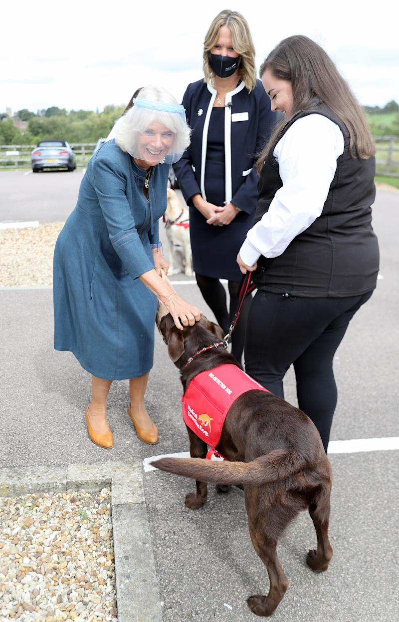 The Duchess of Cornwall meets Basil, a chocolate-coloured Labrador, during her visit to the Medical Detection Dogs charity's training centre in Milton Keynes, where trials are currently underway to determine whether dogs can act as a diagnostic tool of COVID-19.
