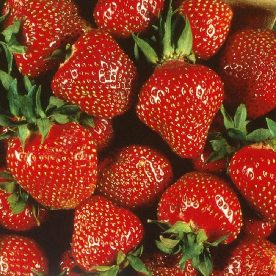 "<p>As long as you mix sand into the soil of these <a href=""https://www.popsugar.com/buy/Quinalt-Everbearing-Strawberry-Bare-Roots-571567?p_name=Quinalt%20Everbearing%20Strawberry%20Bare%20Roots&retailer=amazon.com&pid=571567&price=29&evar1=casa%3Aus&evar9=46114279&evar98=https%3A%2F%2Fwww.popsugar.com%2Fhome%2Fphoto-gallery%2F46114279%2Fimage%2F47449690%2FQuinalt-Everbearing-Strawberry-Bare-Roots&prop13=api&pdata=1"" class=""link rapid-noclick-resp"" rel=""nofollow noopener"" target=""_blank"" data-ylk=""slk:Quinalt Everbearing Strawberry Bare Roots"">Quinalt Everbearing Strawberry Bare Roots </a> ($29), you'll see growth in a matter of days! </p>"