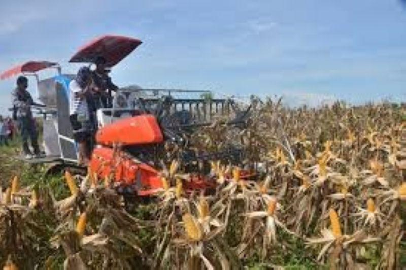 Province to plant crops for sustainability