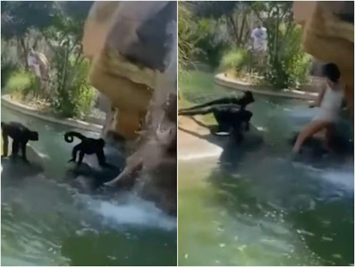 """A woman climbed into a spider monkey enclosure at the El Paso Zoo and was slammed by the Zoo director as """"stupid and lucky"""".  (Instagram/FitFamElPaso)"""
