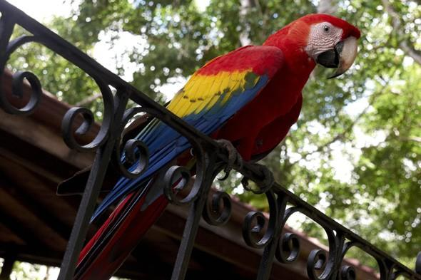 Parrot owner gets £2k payout after bird killed by noise from low-flying jet
