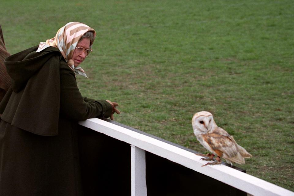 <p>Queen Elizabeth II keeps a close eye on a Barn Owl which landed close to her as she watched a flying display of birds of prey during a visit to the Royal Windsor Horse Show. (PA Archive) </p>