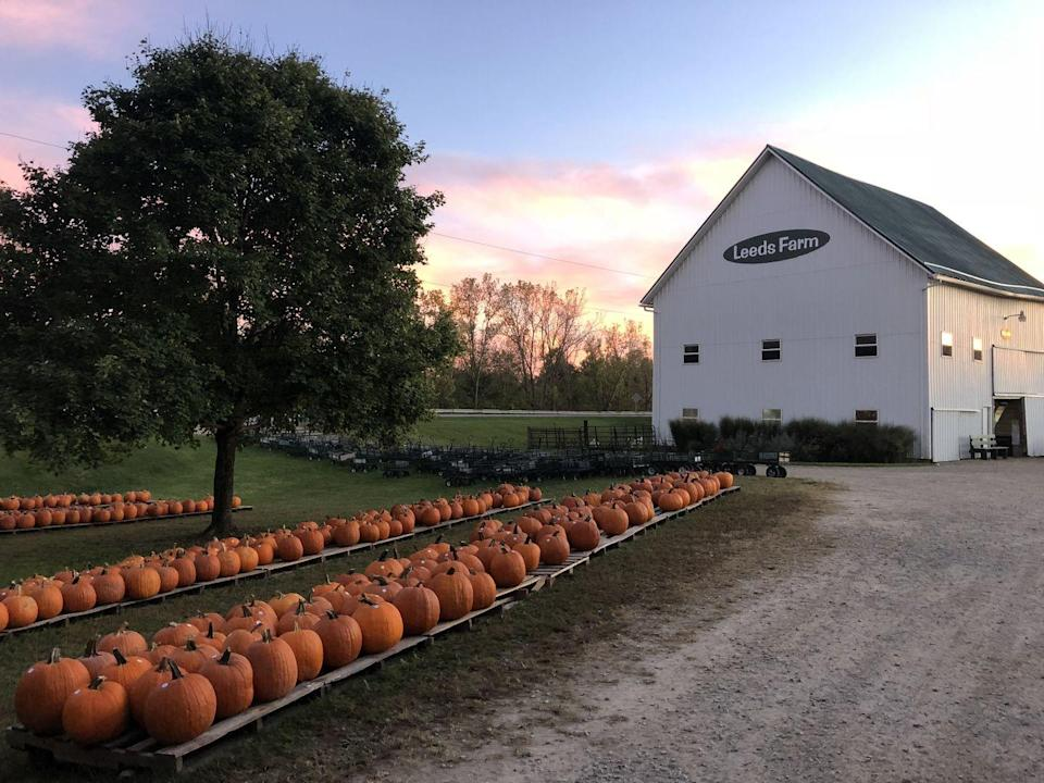 """<p><strong>Ostrander, Ohio (Sept 18-Oct 30)</strong></p><p>Add some spice to your fall weekend at <a href=""""https://www.leedsfarm.com/"""" rel=""""nofollow noopener"""" target=""""_blank"""" data-ylk=""""slk:Leeds Farm"""" class=""""link rapid-noclick-resp""""><strong>Leeds Farm</strong></a>, which boasts a cow palace and tractor tire tower among other attractions like hayrides, mini zip lines, pig races and a pumpkin jump. General admission to the patch is $15 for adults 3–54 years old, and $5 for those 55 and over while kids 2 and under get in for free. Pre-purchased tickets are required.</p>"""