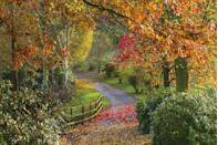 """<p>Meander through the radiant colours at Bodenham Arboretum in the heart of Worcestershire. Visitors will discover plantations, pools and over 3000 species of trees and shrubs from all over the world. </p><p><a class=""""link rapid-noclick-resp"""" href=""""https://www.bodenhamarboretum.co.uk/"""" rel=""""nofollow noopener"""" target=""""_blank"""" data-ylk=""""slk:BOOK NOW"""">BOOK NOW</a></p><p><strong>Like this article? <a href=""""https://hearst.emsecure.net/optiext/cr.aspx?ID=zsATrj4qAwL7PXfHOfbti0xjie5wOfecvOt8e1A3WvL5x0TsMrTgu8waUpN%2BcCNsV3wq_zCaFTleze"""" rel=""""nofollow noopener"""" target=""""_blank"""" data-ylk=""""slk:Sign up to our newsletter"""" class=""""link rapid-noclick-resp"""">Sign up to our newsletter</a> to get more articles like this delivered straight to your inbox.</strong></p><p><a class=""""link rapid-noclick-resp"""" href=""""https://hearst.emsecure.net/optiext/cr.aspx?ID=zsATrj4qAwL7PXfHOfbti0xjie5wOfecvOt8e1A3WvL5x0TsMrTgu8waUpN%2BcCNsV3wq_zCaFTleze"""" rel=""""nofollow noopener"""" target=""""_blank"""" data-ylk=""""slk:SIGN UP"""">SIGN UP</a></p>"""