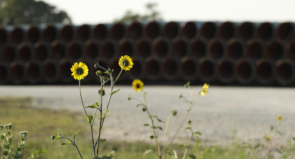 Pipes for a proposed new natural gas pipeline that would pass through the Texas Hill Country are staged near Blanco, Texas Friday, Aug. 2, 2019. A proposed pipeline is a 430-mile, $2 billion natural gas expressway that pipeline giant Kinder Morgan has mapped from the booming West Texas oil patch to Houston. (AP Photo/Eric Gay)