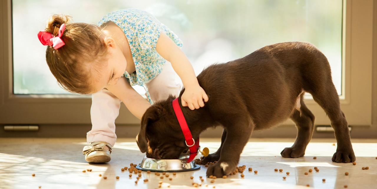"""<p><a href=""""http://www.goodhousekeeping.com/dog-breeds/"""" target=""""_blank"""">Dogs</a> can teach kids responsibility, compassion, and cooperation — not to mention they're the best playmates anyone could ask for. Before you adopt any pup, however, always research the best kind of breed for your children and lifestyle. Some dogs do better as playmates for rambunctious older kids, while others have the gentle, patients souls more suited for little ones. If you have young children at home, consider adopting an older dog as well. Temperaments can vary based on the individual animal, but these 20 friendly breeds are a great place to start your pet adoption search, <a href=""""http://www.akc.org/dog-breeds/best-dogs-for-kids/"""" target=""""_blank"""">according to</a> the <a href=""""http://www.akc.org/dog-breeds/best-family-dogs/"""" target=""""_blank"""">American Kennel Club</a>.</p><p>How you choose can depend on your living arrangements, schedule, activity levels, and budget. The average lifetime cost of raising a dog is <a href=""""https://www.akc.org/expert-advice/lifestyle/cost-to-raise-dog/"""" target=""""_blank"""">more than $20,000</a> across about 10–15 years, including food, supplies, and veterinary care. When you welcome a new pet into the family, expect to provide your pup with consistent, loving training as well. Your child will also benefit from learning how to interact safely and respectfully with animals. Don't forget to create a family schedule for walking, playing, feeding, and grooming! With sweet, loving dog breeds like these, your crew won't be able to imagine life without their canine pal. </p>"""