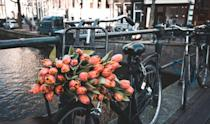 <p>Tulips on a bike along Amsterdam's canals</p>