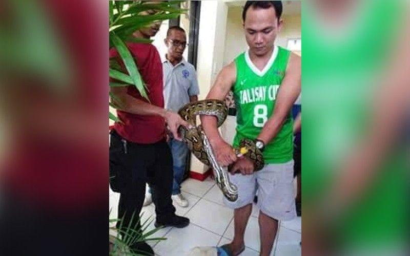 Python 'rescued' in Talisay