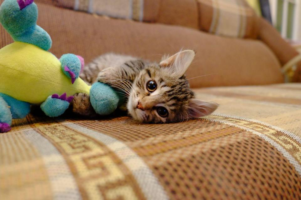 <p>Look at him playing with his dinosaur toy! Look at those big eyes! </p>