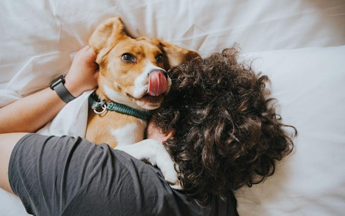 Man with a dog on a bed - Ghetea Florin/Getty Images Contributor