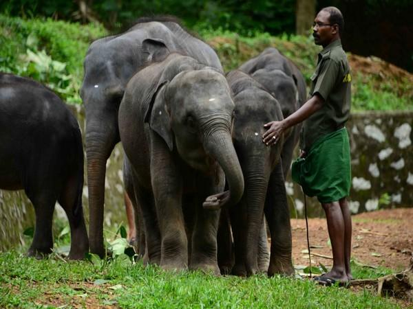 Kottoor elephant rehabilitation centre set to become largest care centre in World (Photo/ANI)