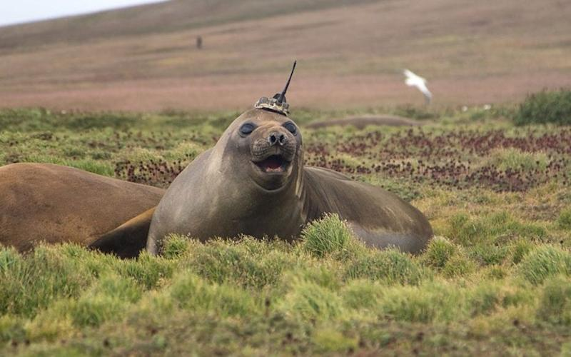 Nasa tagged a southern elephant seal and followed it through its 3,000 mile three month journey - Sorbonne University/Etienne Pauthenet