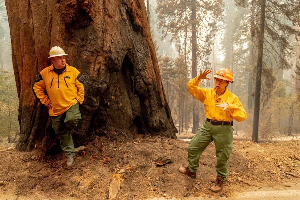 Christy Brigham, Chief of Resources Management & Science, Sequoia & Kings Canyon National Parks, right, and Operations Section Chief Jon Wallace discuss the Four Guardsman sequoia trees Wednesday, September 22, 2021 during a media tour for the KNP Complex Fire in Sequoia National Park.