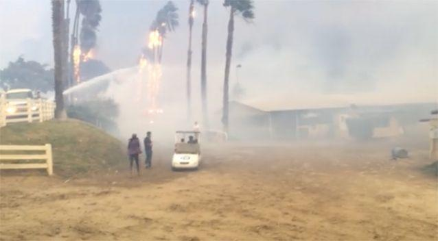 Several horses perished in the fire. Source: Fox 5 San Diego