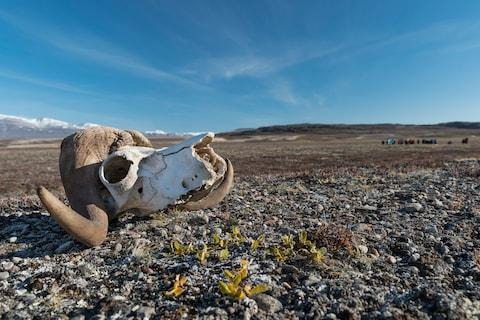 Visit one of the most remote corners of Earth: eastern Greenland - Credit: GETTY