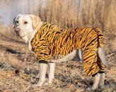 "<p>It's the time of the year where the <a href=""https://people.com/pets/pet-halloween-costumes-chewy/"" rel=""nofollow noopener"" target=""_blank"" data-ylk=""slk:urge to dress up your dog"" class=""link rapid-noclick-resp"">urge to dress up your dog</a> gets especially tempting, and you're not alone. Plenty of pet owners have been using Google to get Halloween costumes ideas for their pooches. <a href=""https://www.semrush.com/"" rel=""nofollow noopener"" target=""_blank"" data-ylk=""slk:SEMrush"" class=""link rapid-noclick-resp"">SEMrush</a>, a data trends provider, analyzed Google search volume and found the ten costumes that are getting the most searches in 2020. Below are the top 10 canine Halloween costumes based on Google searches, so you can dress your pup in a popular outfit or come up with a different idea you know other dogs won't be wearing. </p> <p><strong>10. Tiger King </strong></p> <p><strong>Buy it!</strong> Tiger Dog Costume, $36.95; <a href=""https://www.awin1.com/cread.php?awinmid=6220&awinaffid=272513&clickref=PEOTheTopDogHalloweenCostumesof2020BasedonGoogleSearcheskbender1271PetGal12355244202010I&p=https%3A%2F%2Fwww.etsy.com%2Flisting%2F857994970%2Ftiger-dog-costumes-for-halloween-pet"" rel=""nofollow noopener"" target=""_blank"" data-ylk=""slk:Etsy.com"" class=""link rapid-noclick-resp"">Etsy.com</a></p>"
