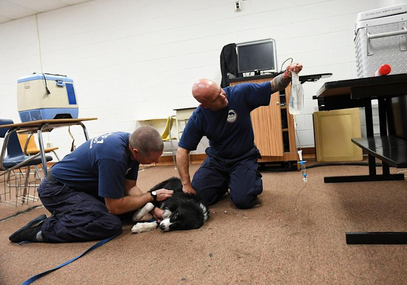 Adan Cooper, a K9 handler from Colorado Springs, left, pets his dog Tag as paramedic Fred Salazar, also from Colorado Springs, gives the dog IV fluids as members of Colorado Task Force 1 prepare for search and rescue operation during Hurricane Florence on September 14, 2018 in Pembroke, North Carolina. IV fluids help the dog stay healthy during his search and rescue work.
