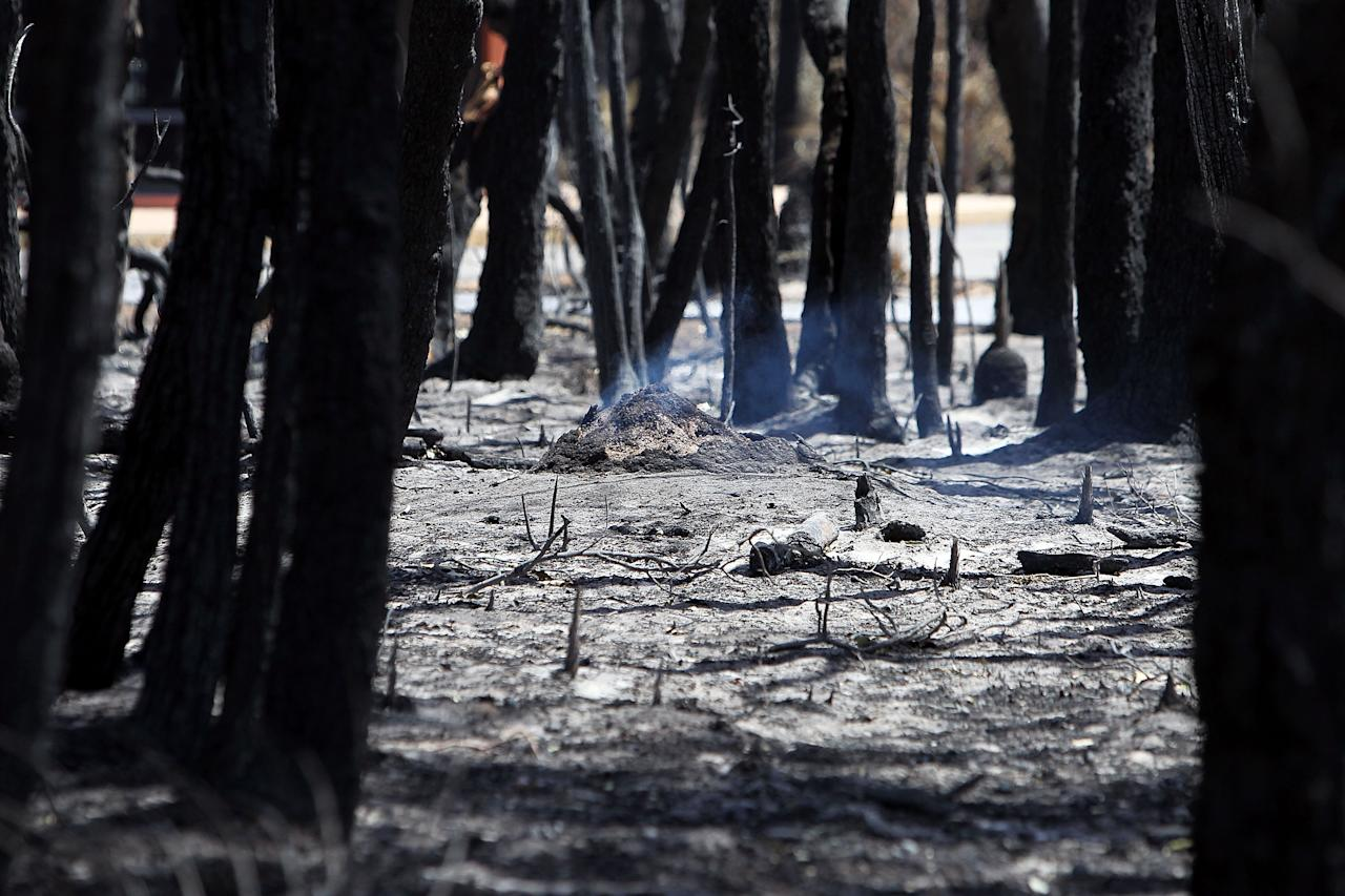 MARGARET RIVER, AUSTRALIA - NOVEMBER 25:  Bushland smoulders on Orchard Ramble following a bush fire on November 25, 2011 in Margaret River, Australia. 4000 hectares of forest and over 30 properties have been destroyed as bush fires continue to burn around Western Australia. Residents from the town of Prevelly fled to the beach for safety and then had to evacuate on jet ski as the bush fires reached the sands. Two additional fires are burning north of the town of Denmark and fire crews are hoping light rains expected today will help with them distinguish the blazes.  (Photo by Will Russell - Pool/Getty Images)