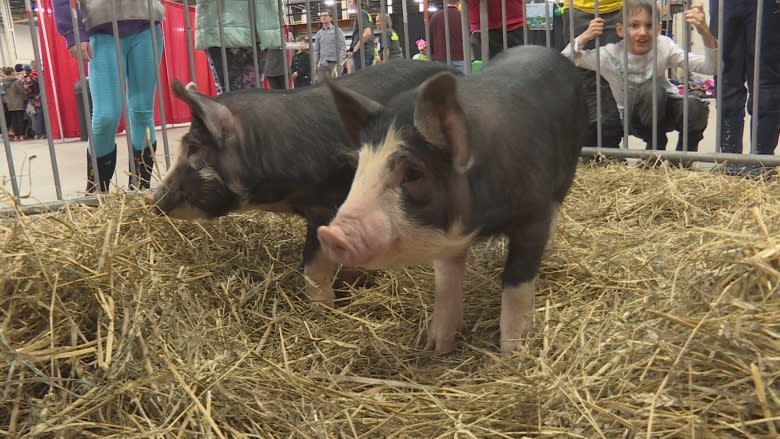 Agriculture Adventure Days brings the farm to students