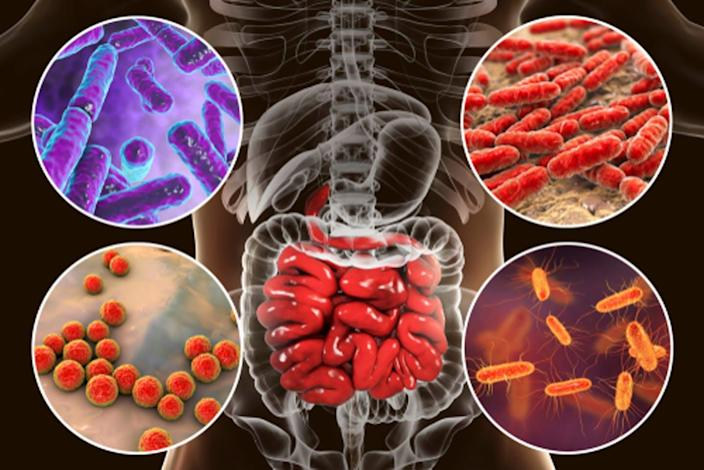 """<span class=""""caption"""">Microbes that make up the microbiome affect health in different ways.</span> <span class=""""attribution""""><a class=""""link rapid-noclick-resp"""" href=""""https://www.shutterstock.com/image-illustration/intestinal-microbiome-bacteria-colonizing-different-parts-1031178730"""" rel=""""nofollow noopener"""" target=""""_blank"""" data-ylk=""""slk:Kateryna Kon/Shutterstock.com"""">Kateryna Kon/Shutterstock.com</a></span>"""