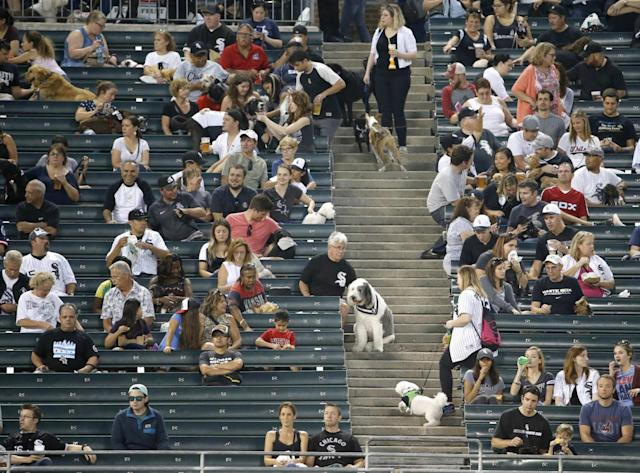 White Sox dogs