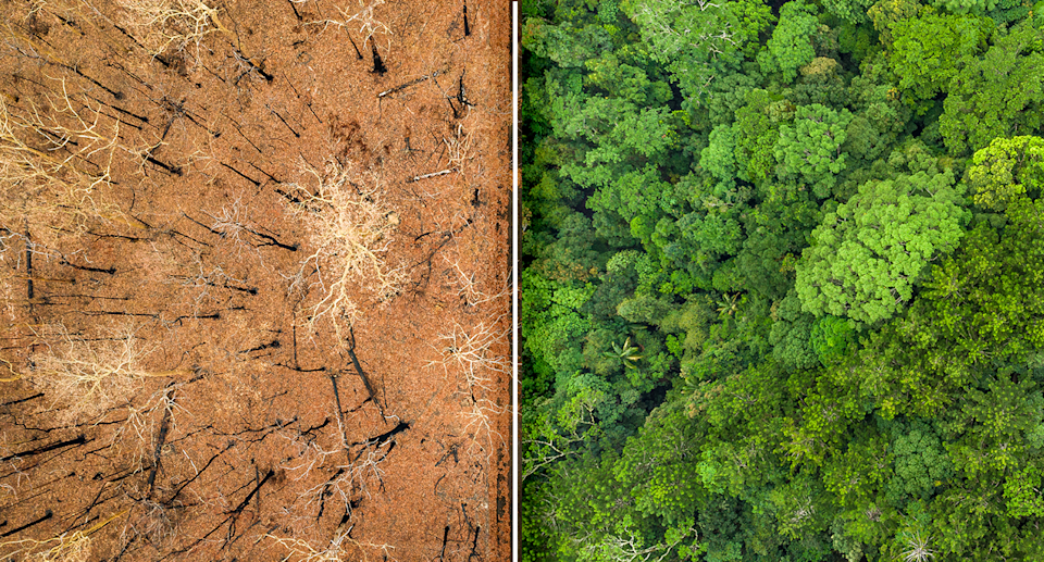 Comparison between burnt forest and unburnt forest.
