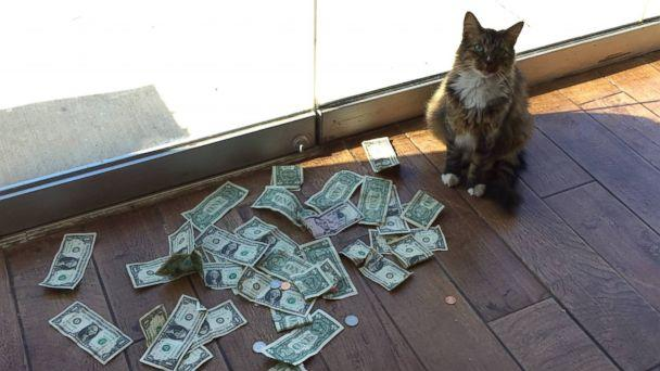 PHOTO: Sir Whines A Lot, also known as the 'Cashnip Kitty,' snatches dollar bills from locals who offer the money through the slot on the door of GuRuStu, a full service marketing firm in Tulsa, Okla. (Stuart McDaniel)