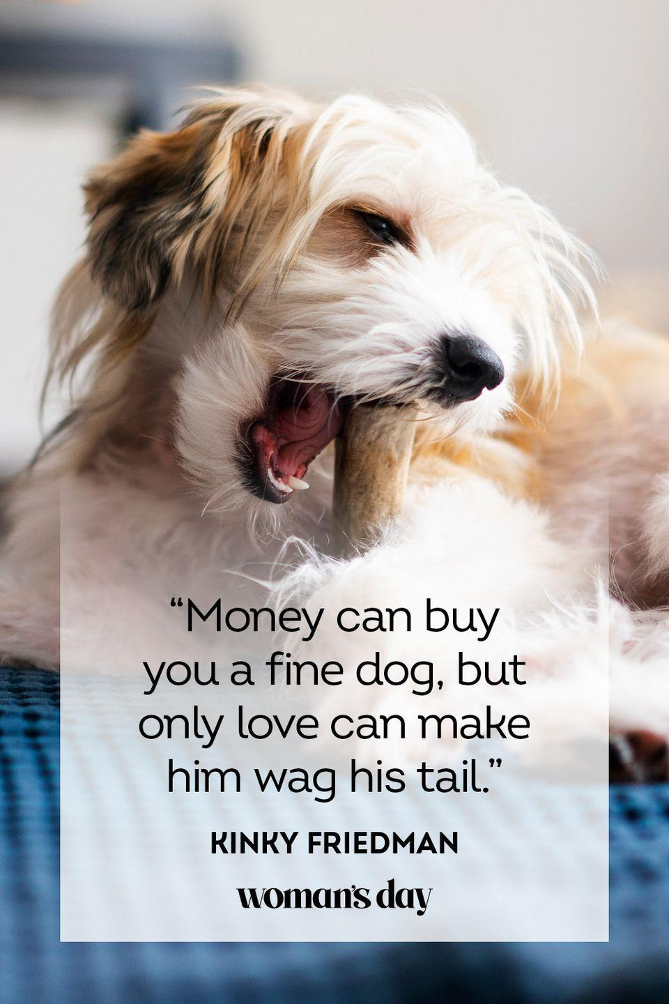 """<p>""""Money can buy you a fine dog, but only love can make him wag his tail.""""</p>"""