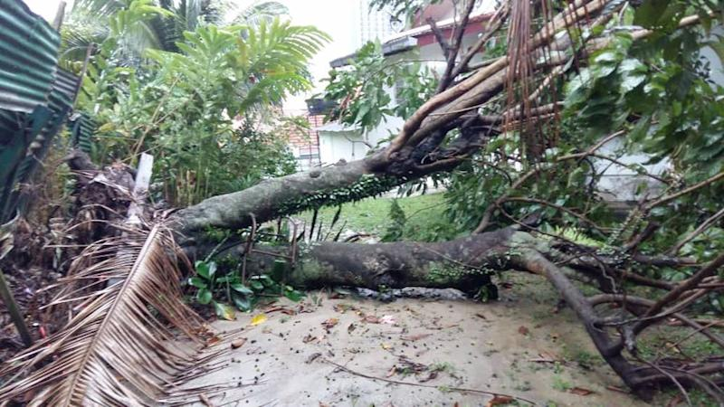 The rambutan tree that fell onto a resident's house on Jalan Abdullah. — Picture courtesy of Jalan Abdullah, Bangsar residents