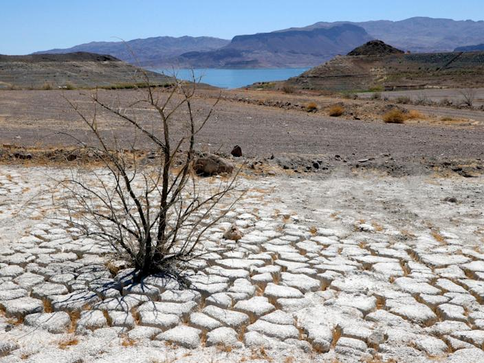 Lake Mead is seen in the distance behind a dead creosote bush in an area of dry, cracked earth that used to be underwater (Getty Images)