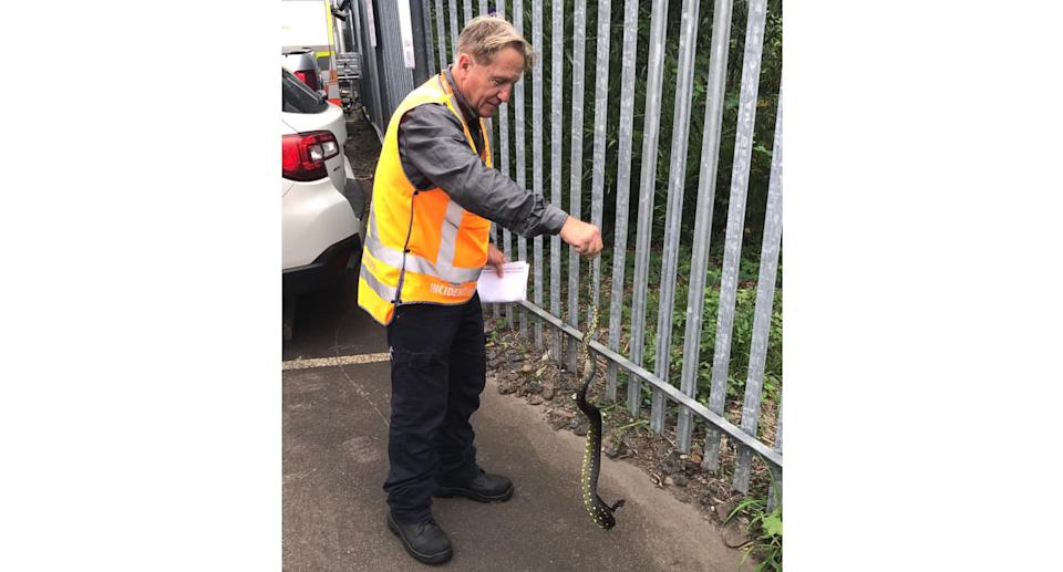 A photo of a Sydney Trains worker holding the snake by the tail. Source: Sydney Trains