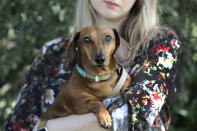 Katherine Sofoluke holding her dog George in her garden in Beckenham, Greater London, Tuesday, Aug. 13, 2019. Across Europe, pet owners like Katherine are seamlessly crossing borders with their beloved dog, cat or even ferret, thanks to the EU Pet Passport scheme. Now, as a no-deal Brexit looms for Britain, free pet travel is under threat. (AP Photo/Natasha Livingstone)