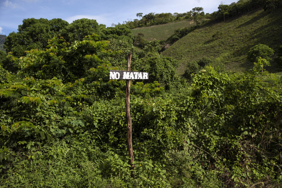 """A handmade road sign with a message that reads, in Spanish, """"Don't kill"""" -- a reference to the Sixth Commandment, """"Thou shall not kill"""" -- pokes out from overgrowth on Friday, June 25, 2021, on the outskirts of La Reina, Honduras, a hillside community destroyed by a mudslide triggered by the November 2020 Hurricanes Eta and Iota. Fearful that the disaster would spur emigration to the United States, Friar Leopoldo Serrano has sought to rebuild on land that was in the hands of drug traffickers. (AP Photo/Rodrigo Abd)"""