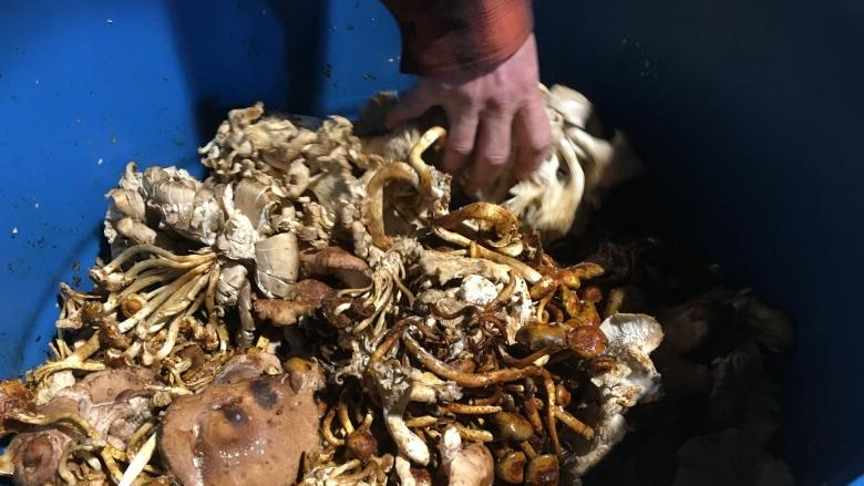 How to turn compost into food — through maggots