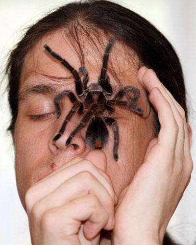Amateur spider keeper Yegor Konkin, 23, displays a venomous Phormictopus antillensis spider on his face at his parents' apartment  in the town of Minusinsk, some 425 km (264 miles) south of Russia's Siberian city of Krasnoyarsk, May 20, 2012.  Konkin, a hobbyist who has collected spiders for two years, lives in St.-Petersburg and in Minusinsk and keeps approximately 50 venomous spiders of various species, which are deadly to humans and other animals. REUTERS/Ilya Naymushin