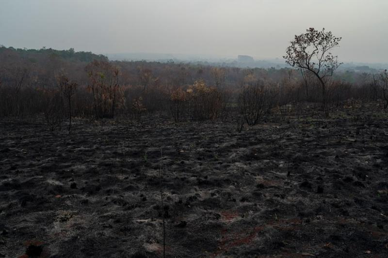 A scorched field is seen in Altamira, Para state, Brazil, Saturday, Aug. 24, 2019